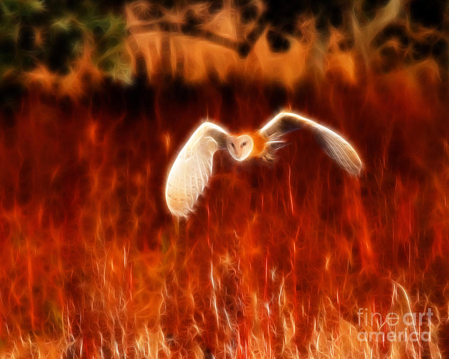 Barn Owl Photograph - Through The Fire by Beth Sargent