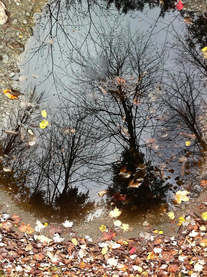 Autumn Photograph - Through The Looking Glass by Elijah Brook