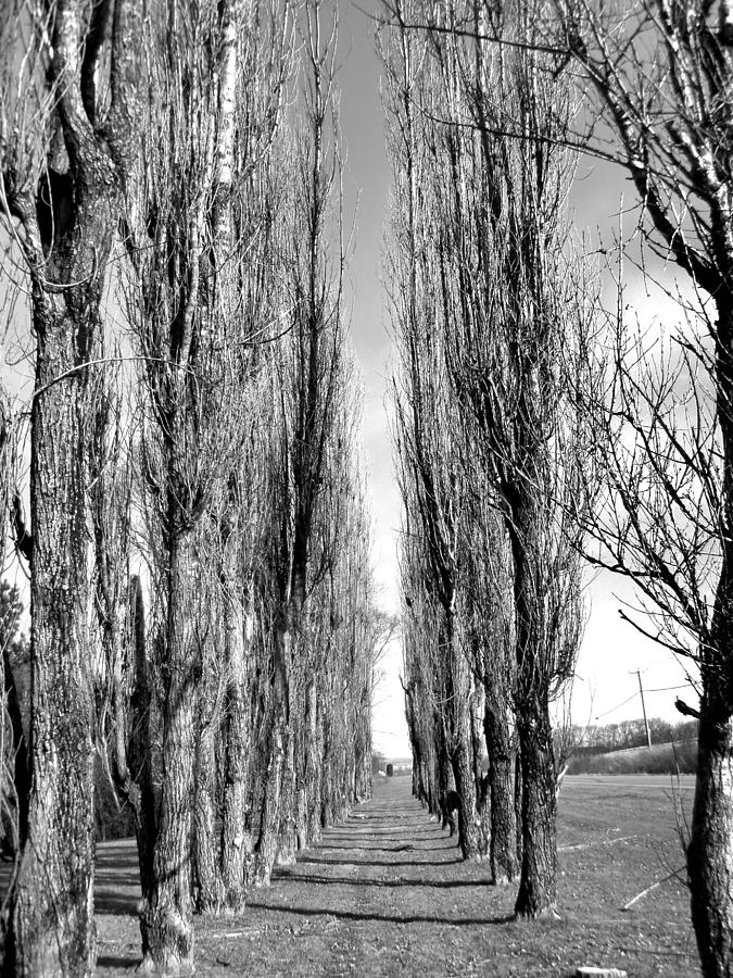 Landscape Photograph - Through The Trees by Jonathan Lagace