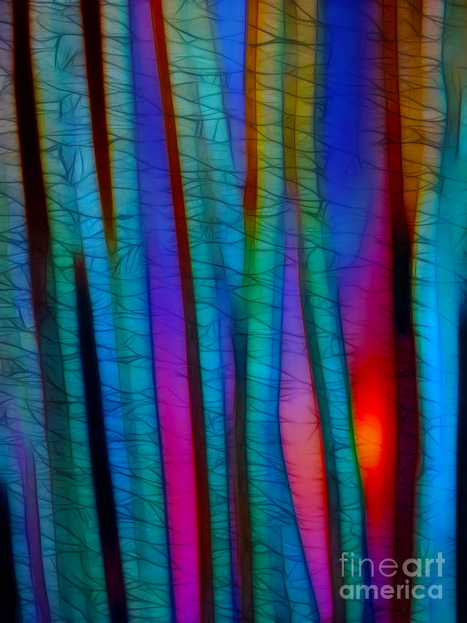 Trees Photograph - Through The Trees by Judi Bagwell