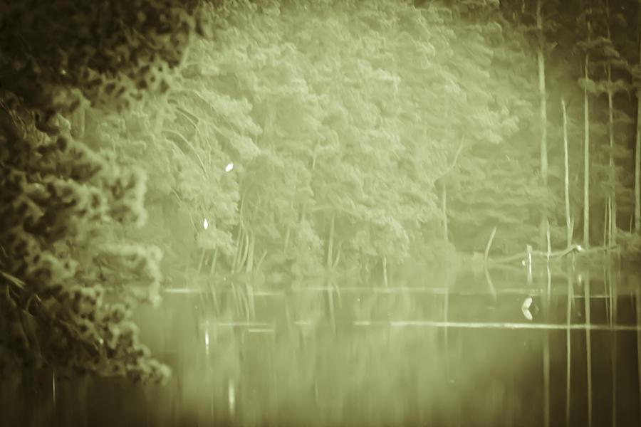 Heron Photograph - Through The Trees by Kim Henderson