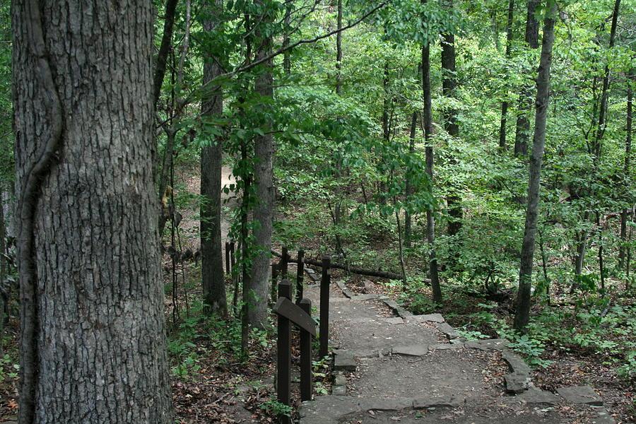 Arkansas Photograph - Through The Woods by CGHepburn Scenic Photos