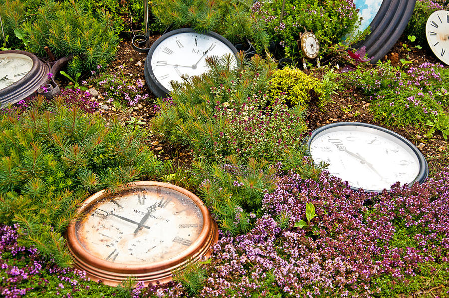 Thyme Photograph - Thyme And Time by Chris Thaxter