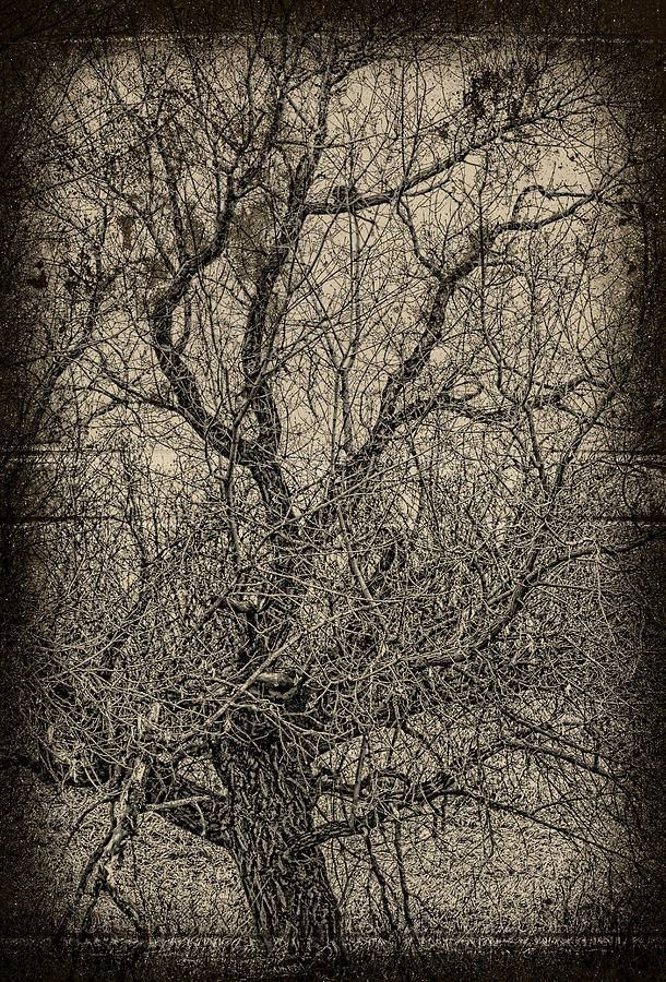 Tree Photograph - Tickle Of Branches  by Jerry Cordeiro
