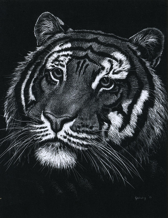 Tiger Drawing - Tiger Head Two by Bill Gehring