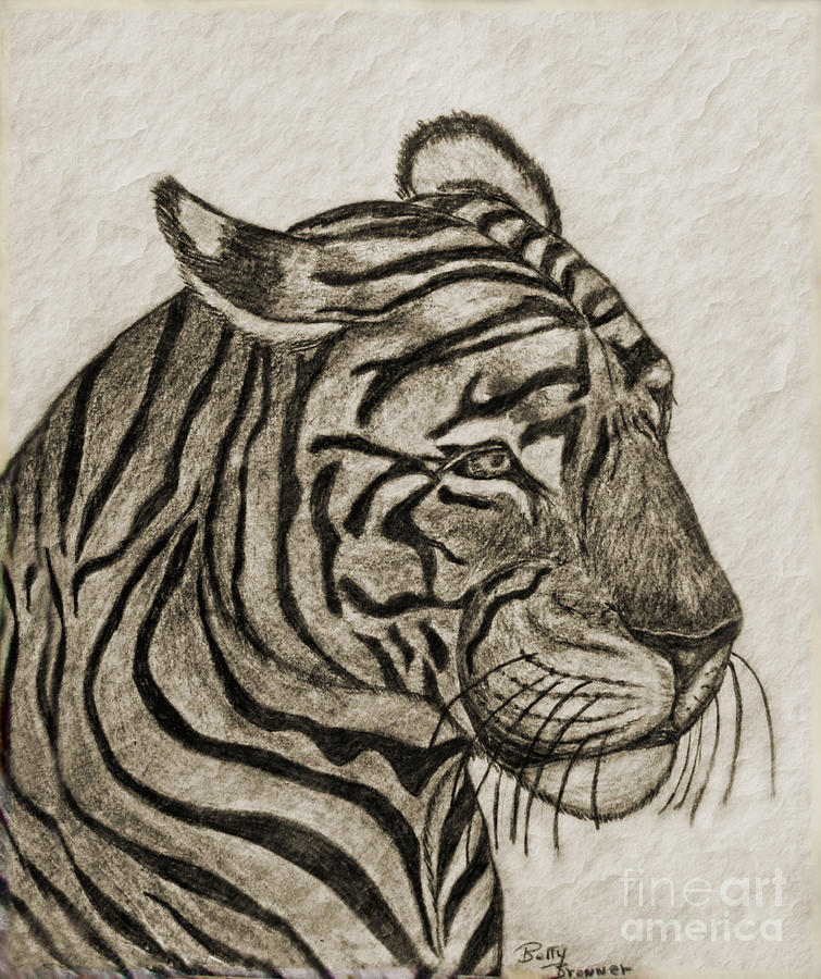 Animals Drawing - Tiger Iv by Debbie Portwood