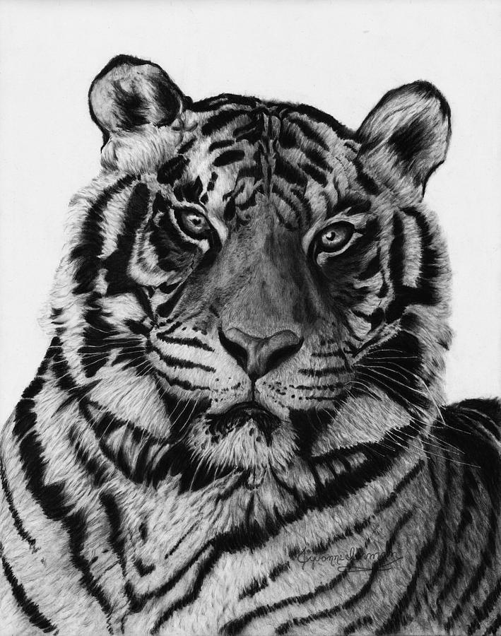 Black And White Drawing - Tiger by Jyvonne Inman