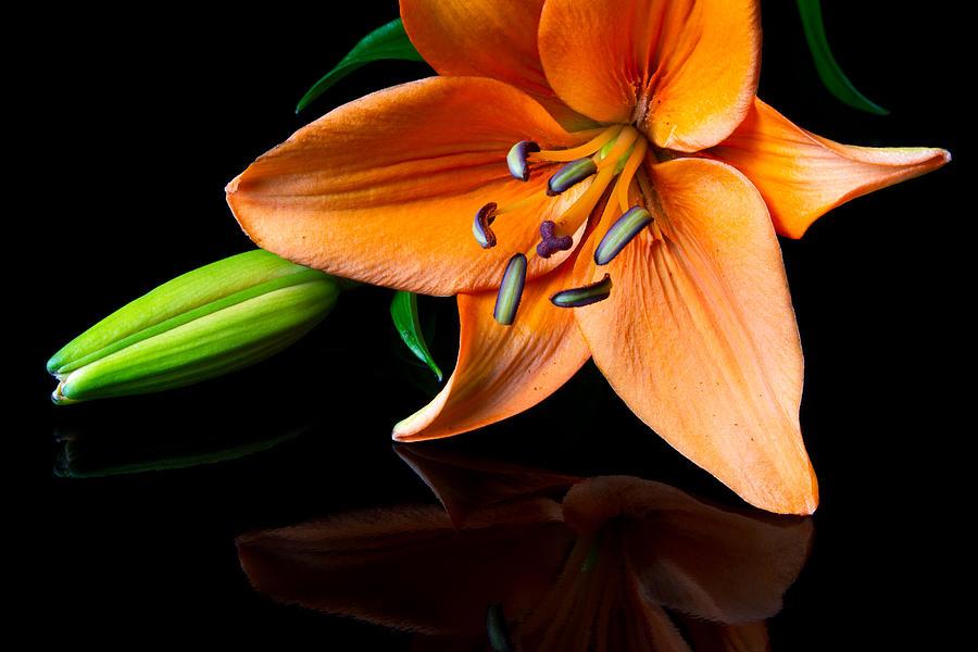 Beautiful Photograph - Tiger Lily by Jason Smith