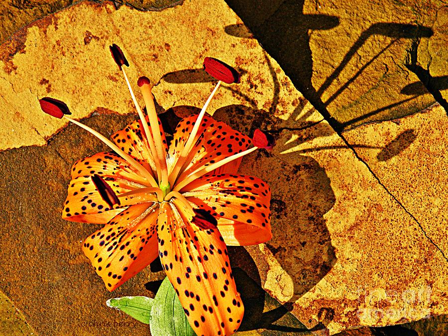 Lily Photograph - Tiger Lily Still Life  by Chris Berry