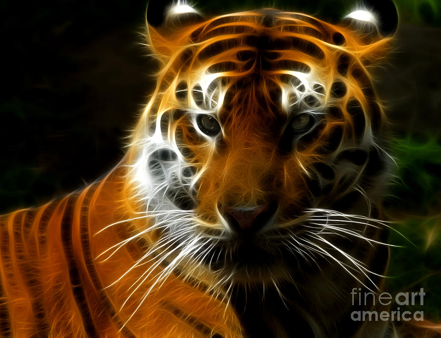 California Photograph - Tiger Portrait by Katja Zuske