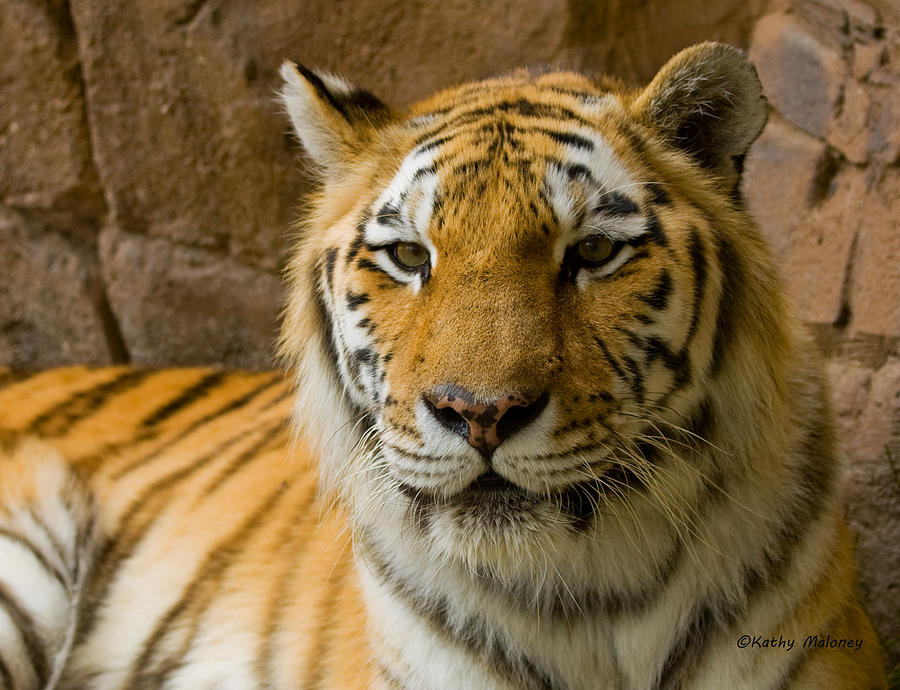 Tiger Stripes by Kathy Maloney