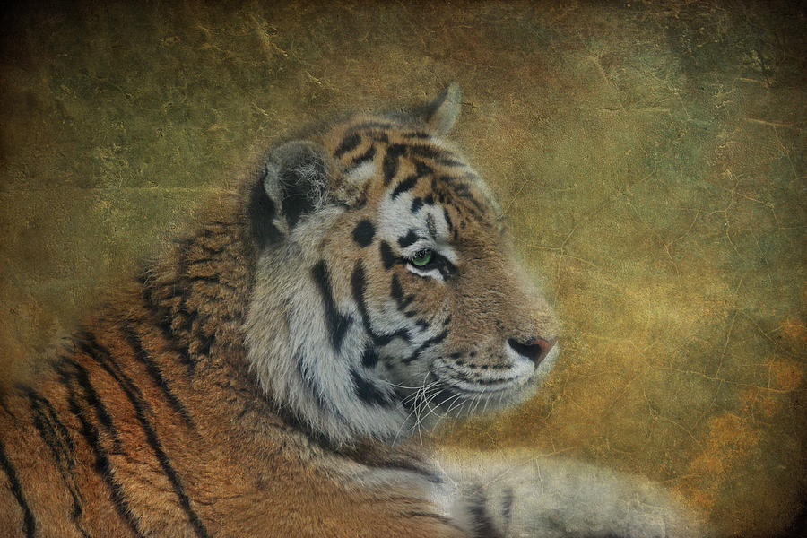 Tiger Photograph - Tigerlily by Claudia Moeckel
