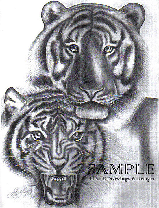 Portraits Drawing - Tigers by Rick Hill