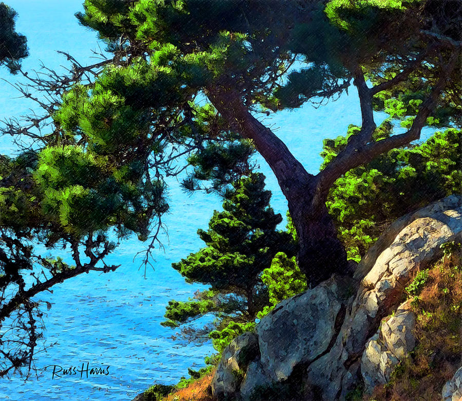 Pine Tree Painting - Timber Cove In Sonoma Coast by Russ Harris