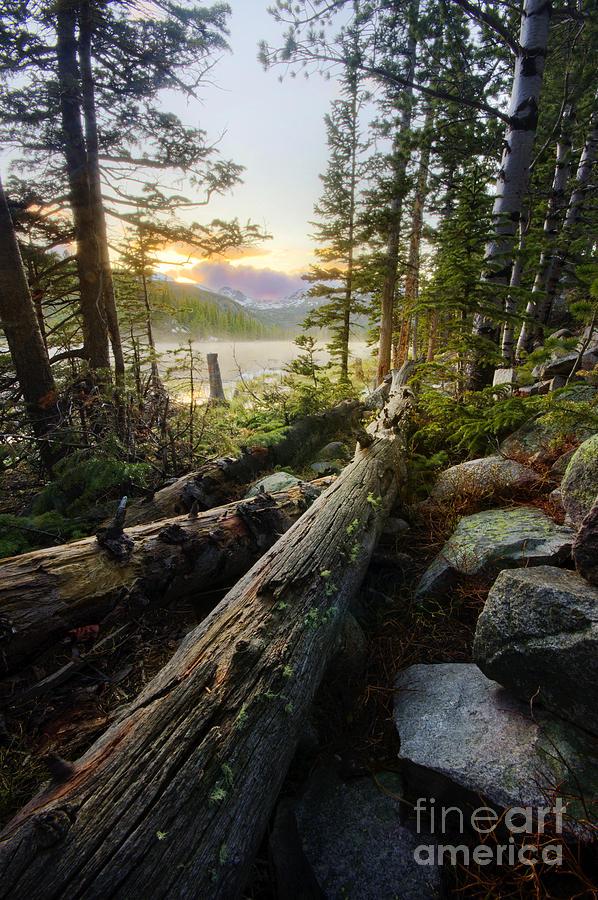 Tyler Porter Photograph - Timber by Tyler Porter