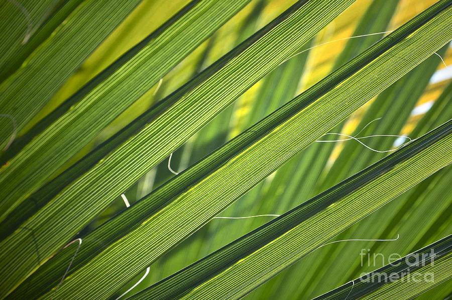 Palm Photograph - Time And Space by Gwyn Newcombe