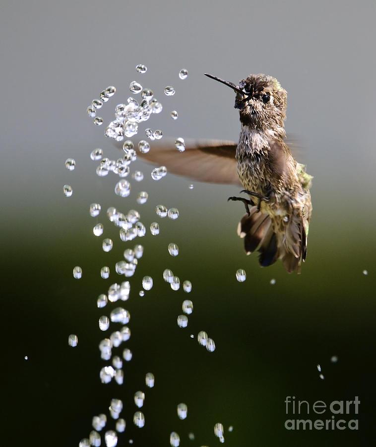 Bird Photograph - Time Standing Still by Katja Zuske