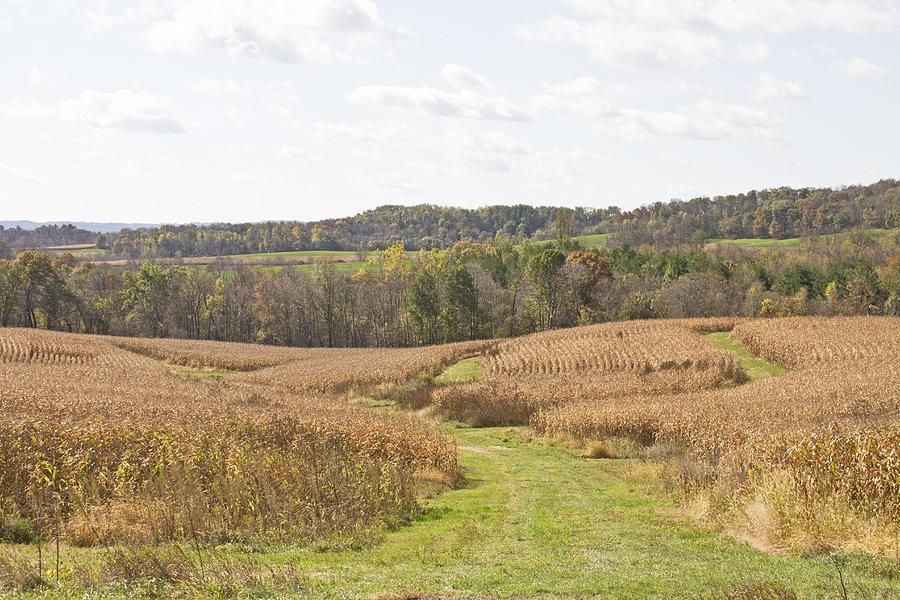 Corn Photograph - Time To Harvest by Wayne Stabnaw
