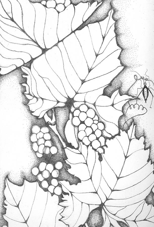 Time To Make Wine Drawing By Sheba Goldstein
