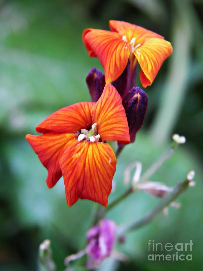 Sarah Loft Photograph - Tiny Floral Sparks by Sarah Loft