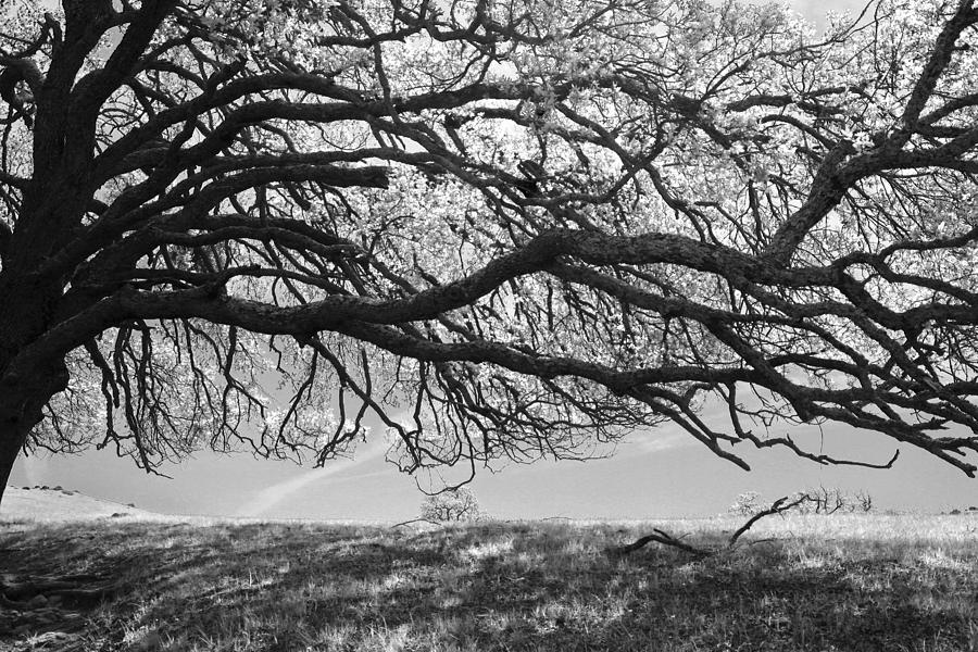 Trees Photograph - To Lie Here With You Would Be Heaven by Laurie Search