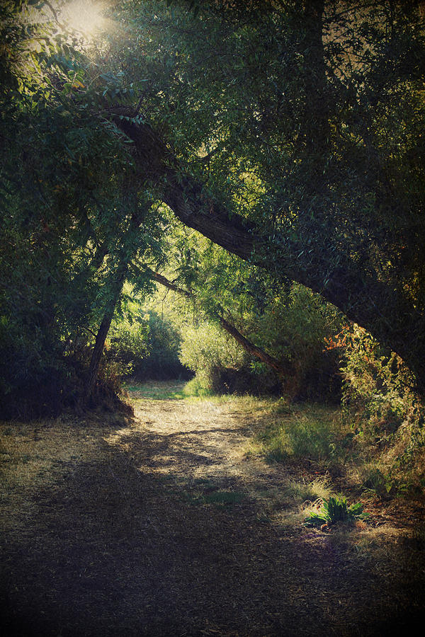 Landscapes Photograph - To My Happy Place by Laurie Search
