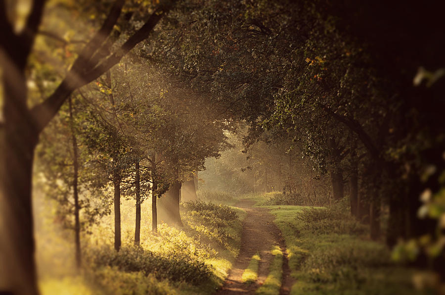 Landscape Photograph - To The Shire by Studio Yuki