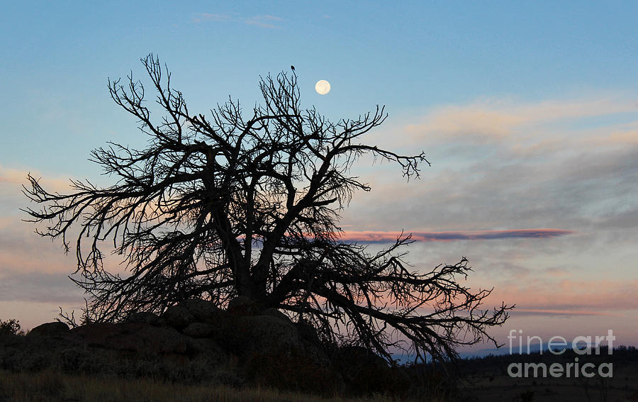 Wyoming Photograph - To The Tune Of A Blue Moon by Wesley Hahn