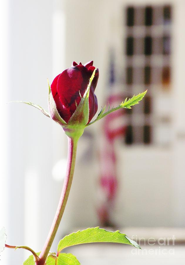 Rose Photograph - Together We Stand by Wendy Martin