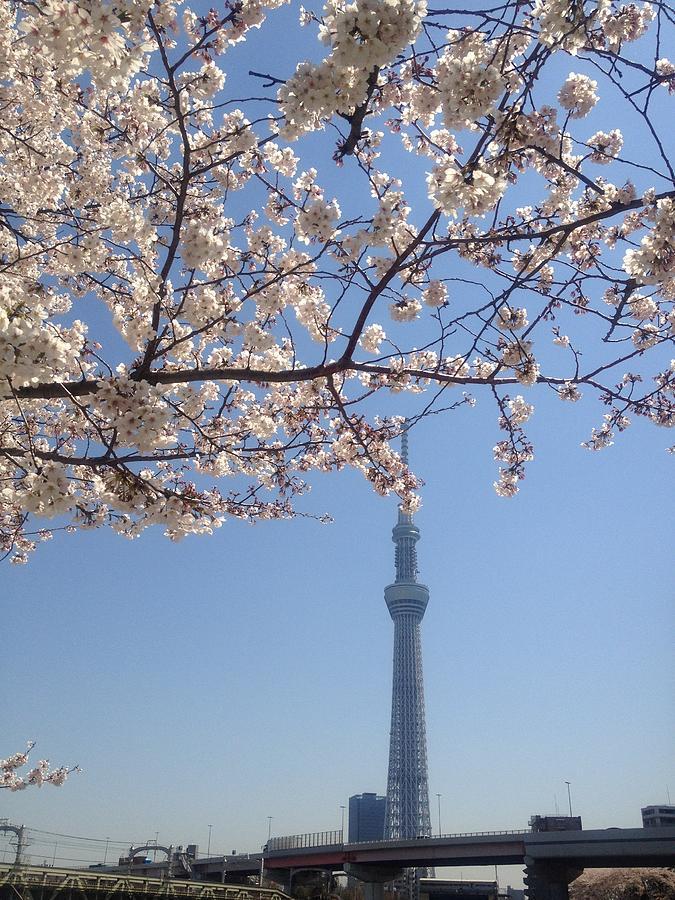 Vertical Photograph - Tokyo Sky Tree by Hisako Hatakeyama
