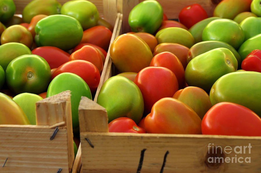 Agriculture Photograph - Tomatoes by Carlos Caetano