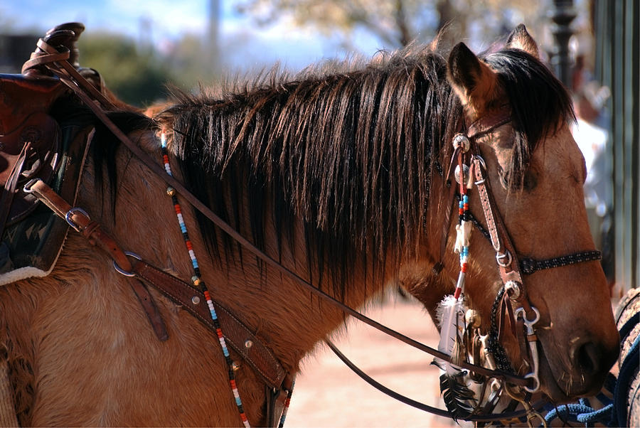 Riding Gear Photograph - Tombstone Horse by Anthony Citro