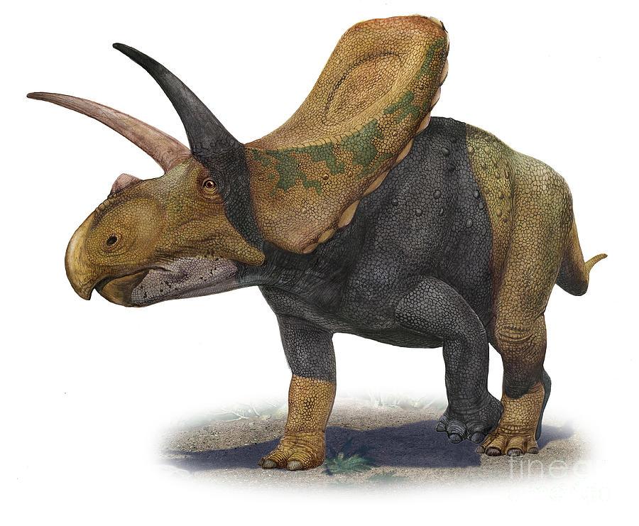 Horizontal Digital Art - Torosaurus Latus, A Prehistoric Era by Sergey Krasovskiy