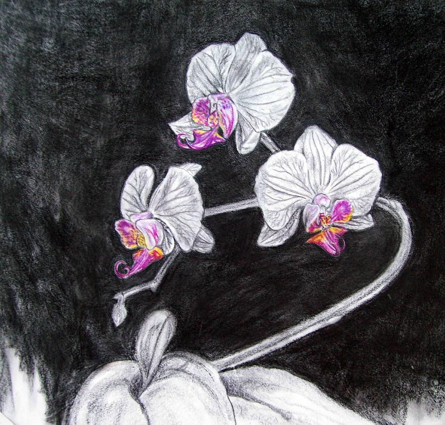 Orchids Drawing - Touch Of Pink by Diana Shively