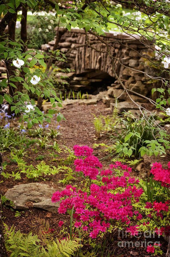 Azalea Photograph - Touch Of Spring by Cheryl Davis