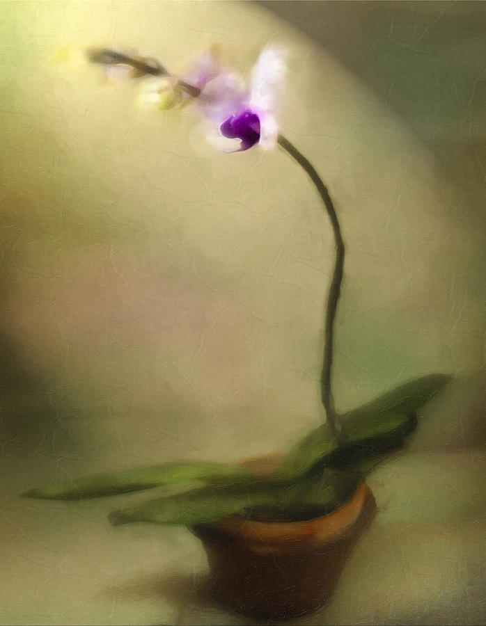 Digital Painting Digital Art - Toward The Light by Jill Balsam