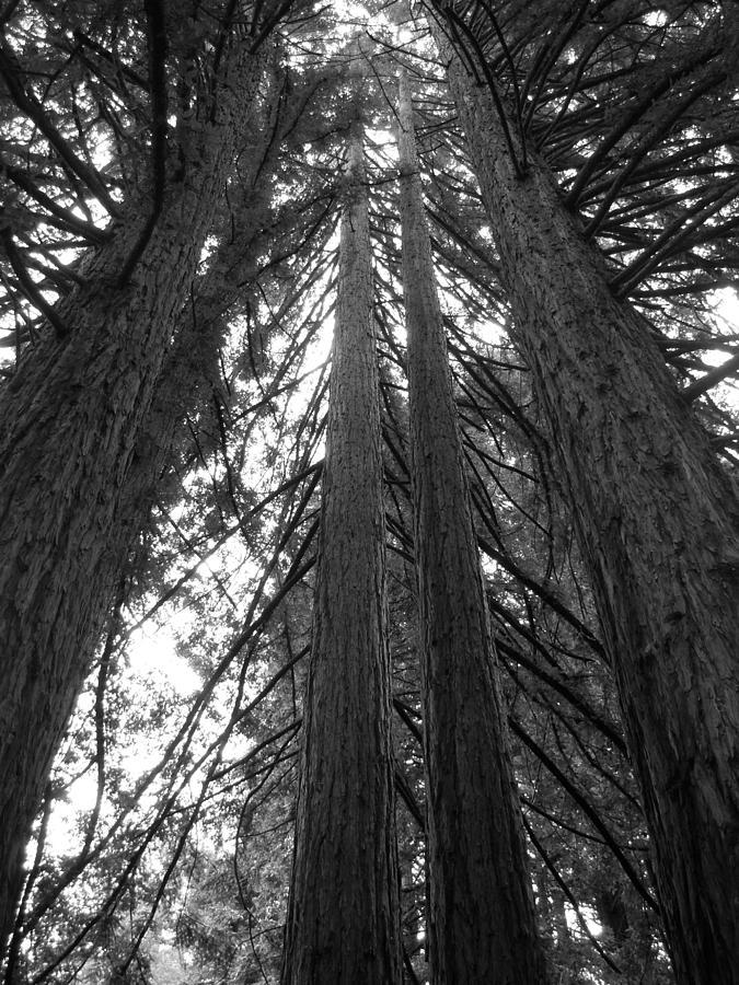 Trees Photograph - Towering Giants by Matt Hanson