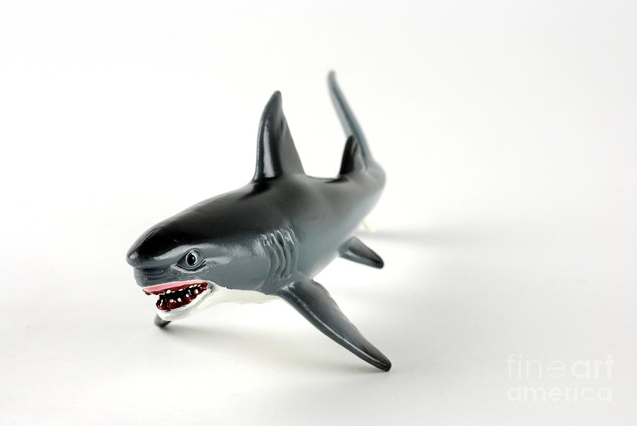 Plastic Photograph - Toy Shark by Photo Researchers, Inc.