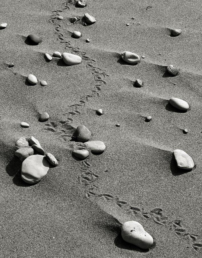 Tracks Photograph - Tracks And Rocks by Brady D Hebert
