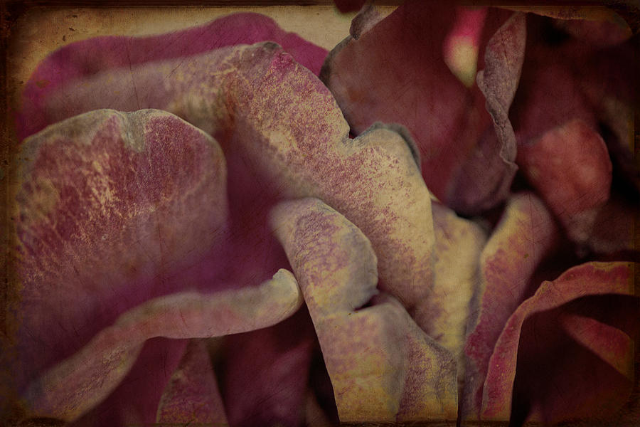 Textures Photograph - Tragic Love by Lisa Knechtel
