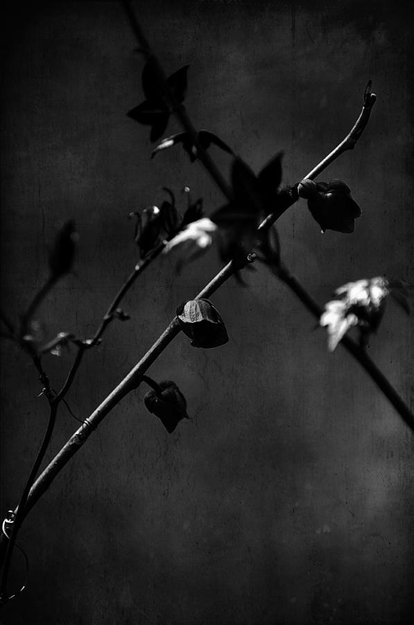 Spring Photograph - Trances And Dreams by Rebecca Sherman