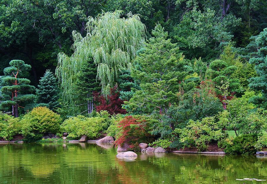 tranquil nature