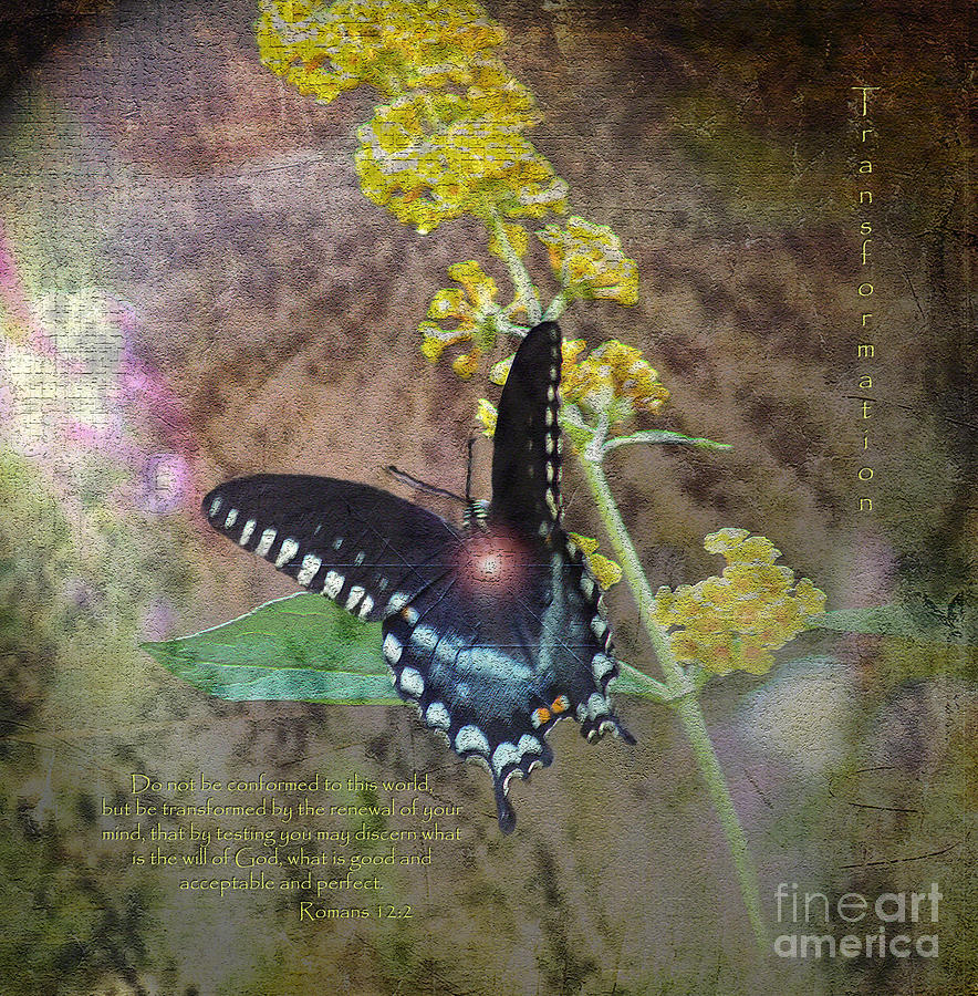 Mixed Media Photograph - Transformation by Patricia Griffin Brett
