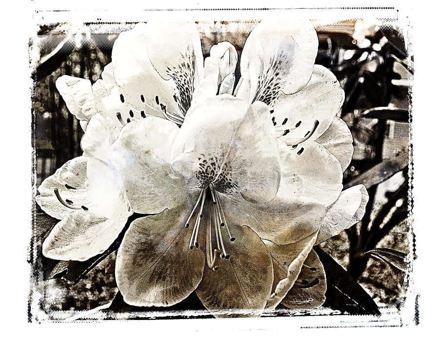 Flowers Photograph - Transparency  by Tanya Jacobson-Smith