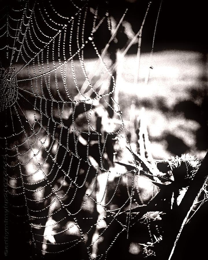 Trap Photograph - Trap - Falle by Mimulux patricia No