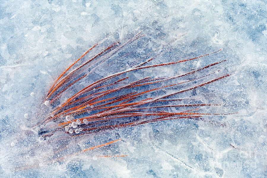 Ice Photograph - Trapped In Winter by Mike  Dawson
