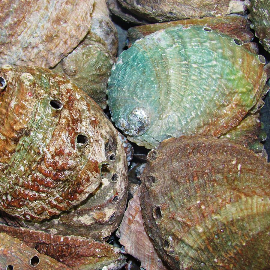 Abalone Photograph - Treasures Vii by Christine  Fifer
