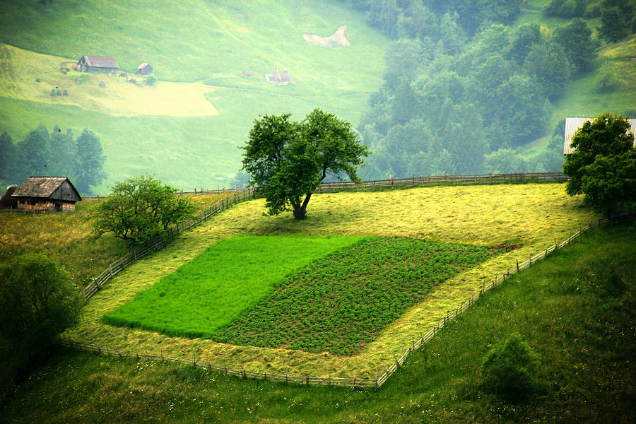 Alone Photograph - Tree And Field by Emanuel Tanjala