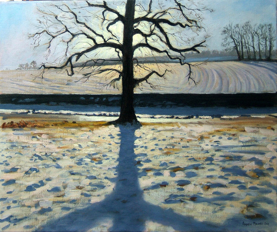 English Landscape Painting - Tree And Shadow Calke Abbey Derbyshire by Andrew Macara