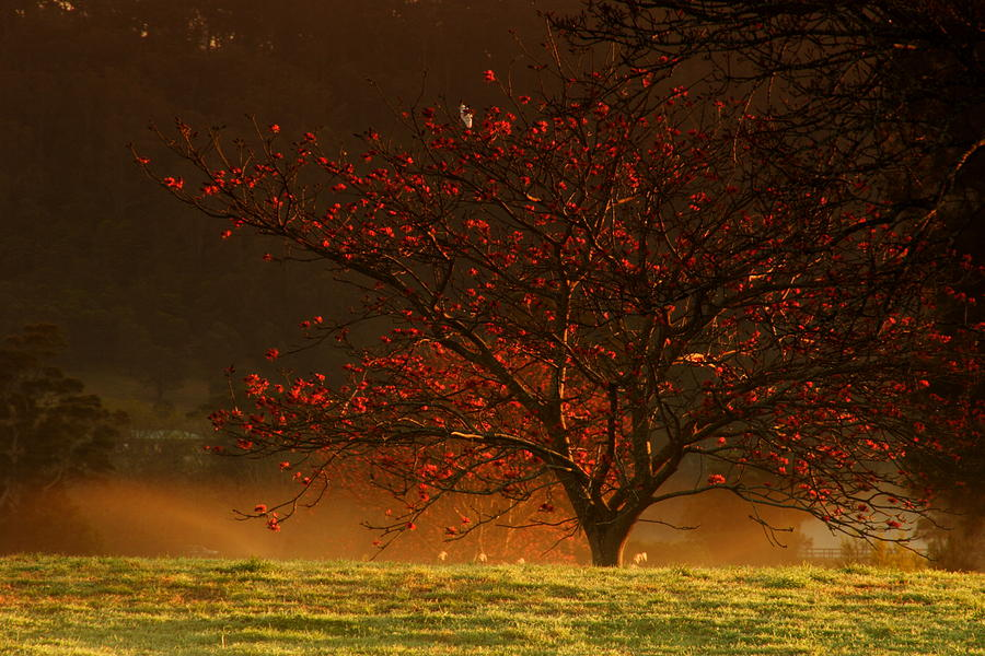 Large Photograph - Tree At Sunrise by Noel Elliot